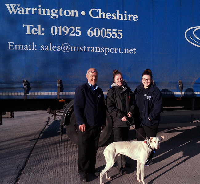 TPN Member M&S Transport rescues a stray lurcher during deliveries
